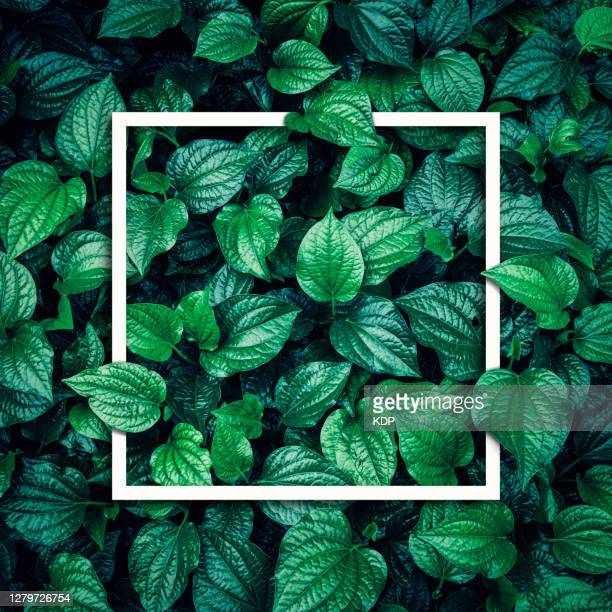 green leaves pattern background with texting frame, natural lush foliages of leaf texture backgrounds. - gedeihend stock-fotos und bilder