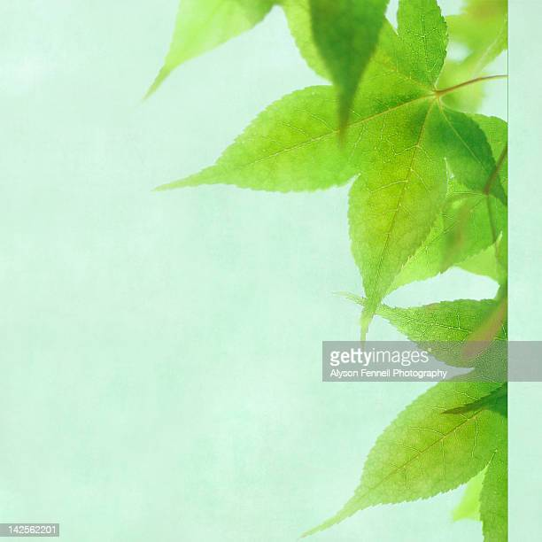 green leaves - alyson fennell stock pictures, royalty-free photos & images