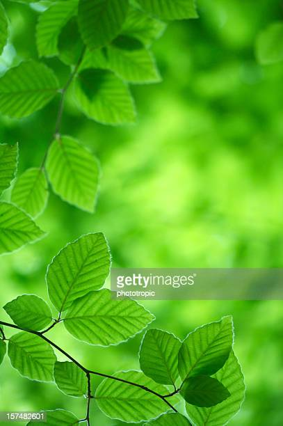 green leaves - soft focus stock pictures, royalty-free photos & images