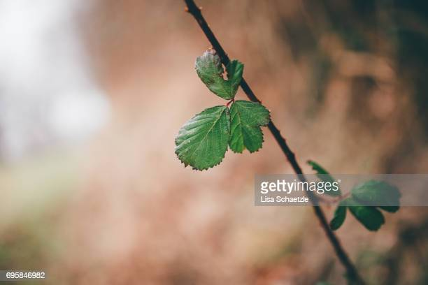 green leaves - ruhige szene stock pictures, royalty-free photos & images