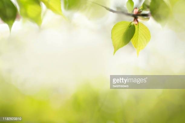 green leaves text space image. - 陰 ストックフォトと画像