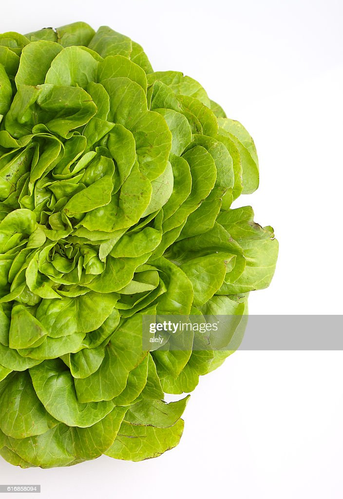 Green lettuce on a white background, selective focus. : Stock Photo