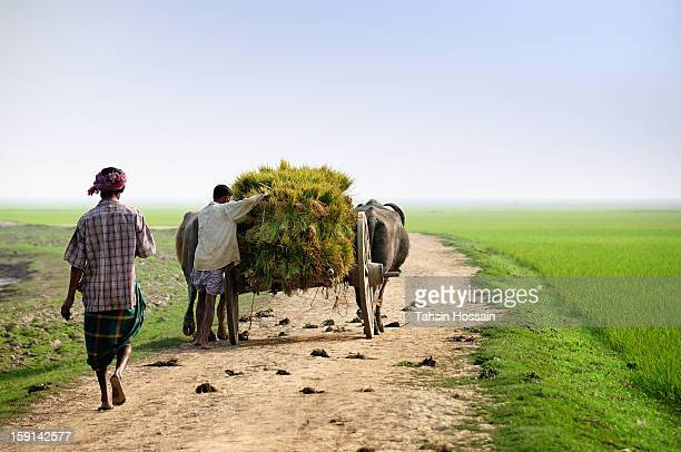 a green life! - bangladesh village stock photos and pictures