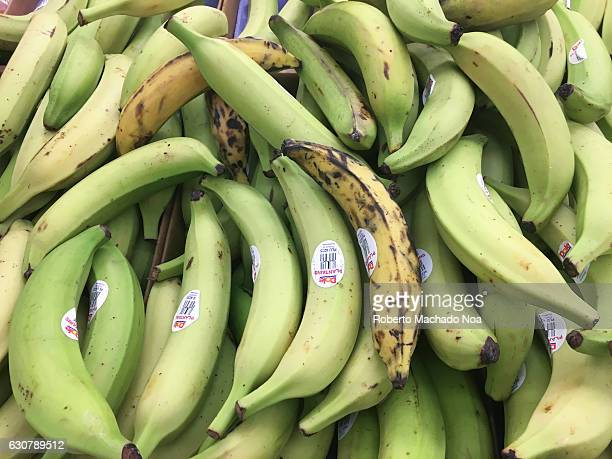 Green long fresh half ripe plantain bananas lying in pile in grocery store Few over ripe ones also among them