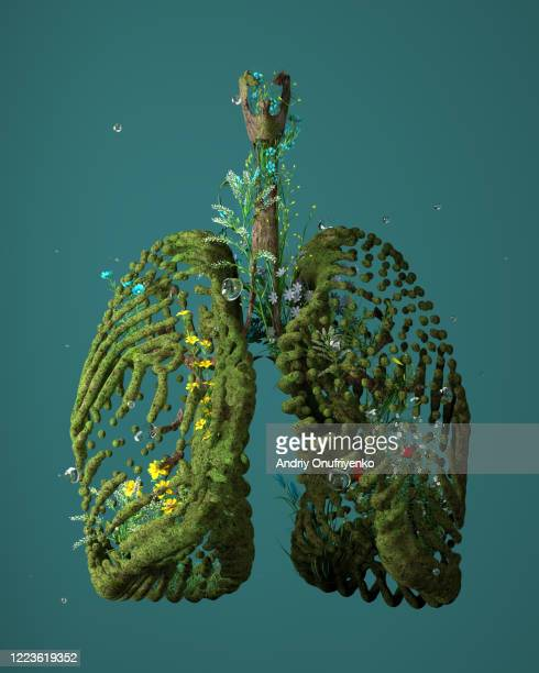 green lungs - gras stock pictures, royalty-free photos & images