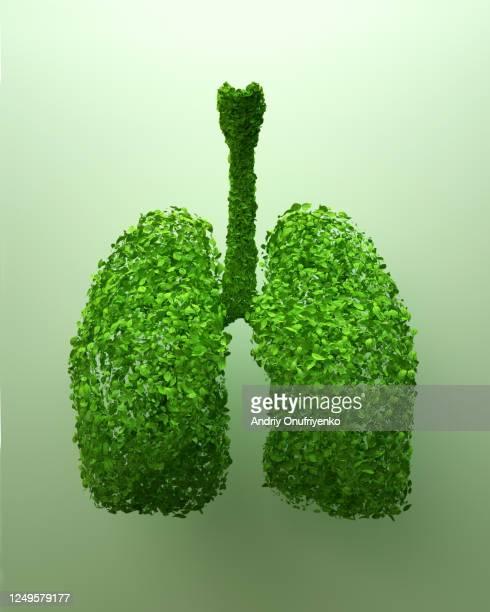 green lungs - órgão interno humano - fotografias e filmes do acervo