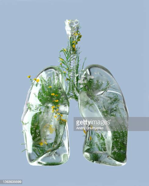 green lungs - lung stock pictures, royalty-free photos & images