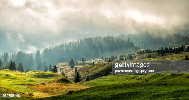 green, lush and misty scenery on alp flix in prc ela, graubünden - mountain range stock pictures, royalty-free photos & images