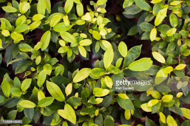 Green lush foliage background