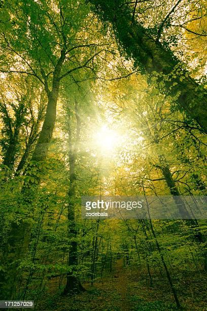 verde exuberante floresta e sol - copa - fotografias e filmes do acervo