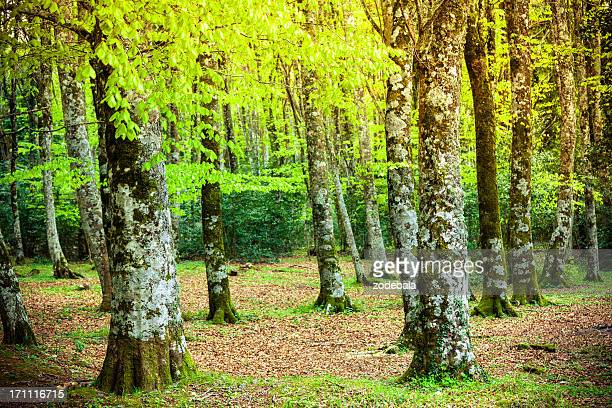 Green Lush Forest in Spring