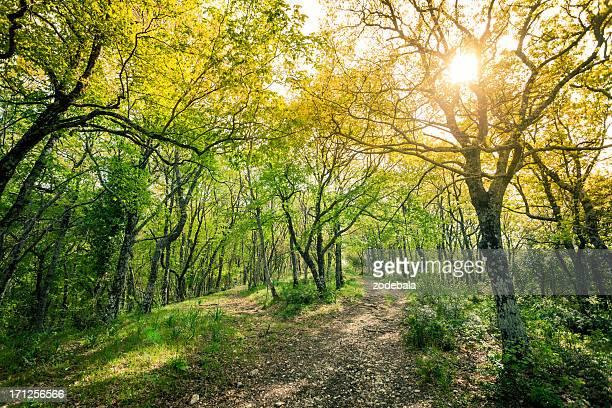 verde foresta lussureggiante in primavera - bosco foto e immagini stock