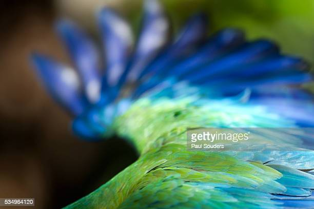 green macaw, costa rica - papagayo guanacaste fotografías e imágenes de stock