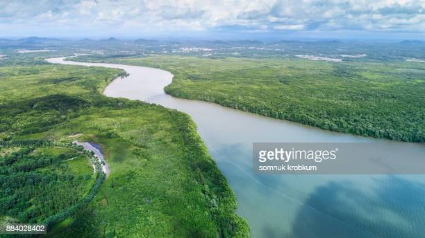 Green mangrove forest and river