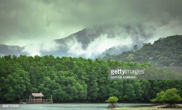 Green mangrove forest in rainy season at Koh Chang;Thailand