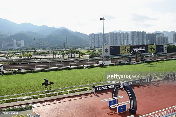 Green Mask from USA gallops on the grass during a trackwork session at Sha Tin Racecouse on December 11, 2015 in Hong Kong, Hong Kong.