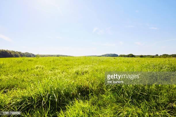 green meadow against blue sky in summer - wiese stock-fotos und bilder