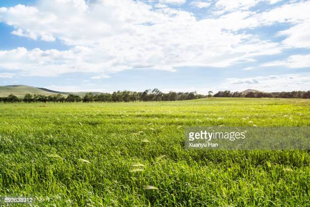 green meadow and blue sky - pasture stock pictures, royalty-free photos & images