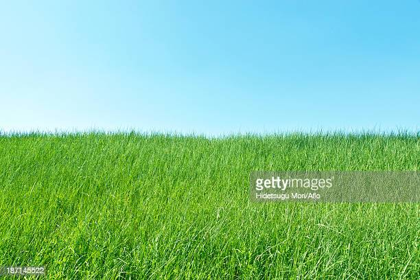 green meadow and sky - water's edge stock pictures, royalty-free photos & images