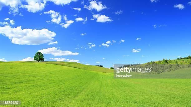 Grünen Wiese und Baum-sonnigen Landschaft Panorama