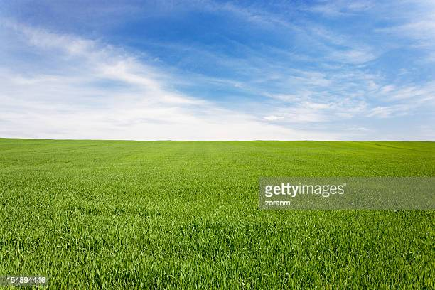 green meadow field under a blue sky with clouds - pasture stock pictures, royalty-free photos & images