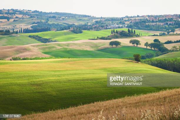 green meadow grass field landscape view farms typical curved road with cypress at crete senesi in toscana, italia, europe nature scenics background - italia stockfoto's en -beelden