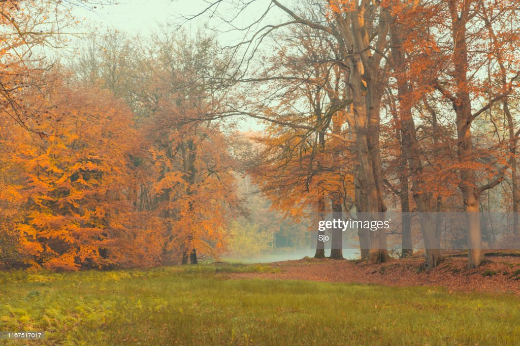 Green meadow in a misty forest during a beautiful foggy autumn day : Stock Photo