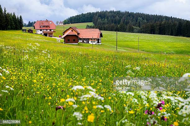 Green meadow near the Schwarzwald Panoramastrasse in Germany
