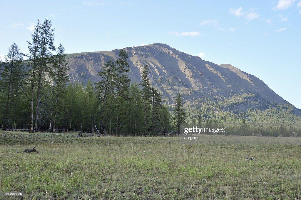 Prati verdi della valle di montagna del fiume Suntar. : Foto stock