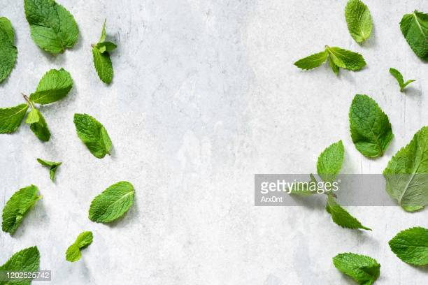 green mint leaf flat lay - mint leaf culinary stock pictures, royalty-free photos & images
