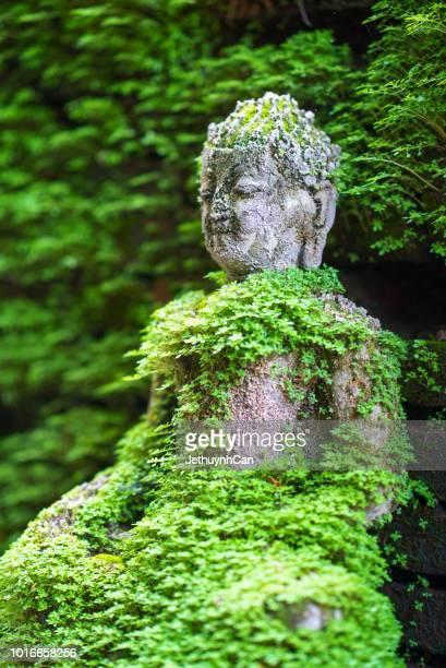 green moss covered buddha statue - musgo - fotografias e filmes do acervo