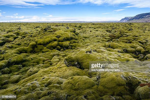 green moss covered lava field, iceland - lava plain stock pictures, royalty-free photos & images