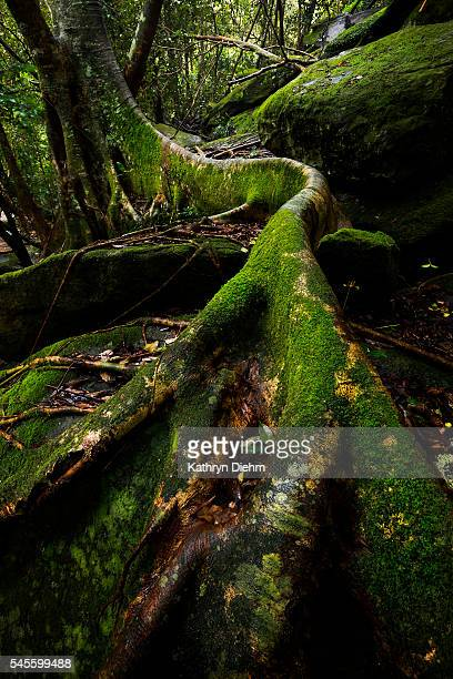 green moss of tree roots