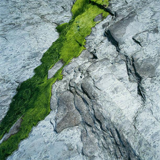 Green moss on silvery stone