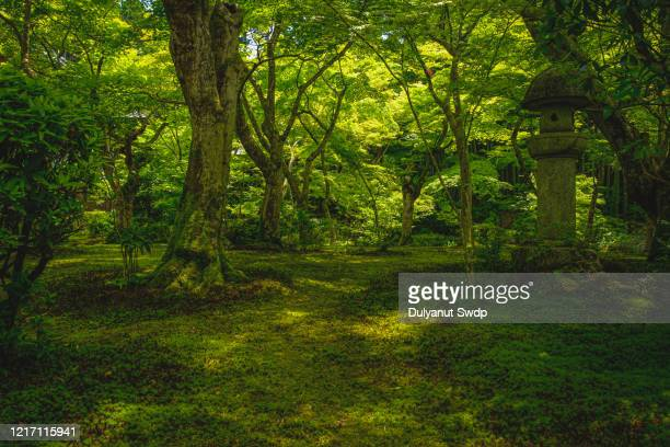 green mossy forest - 自然 ストックフォトと画像
