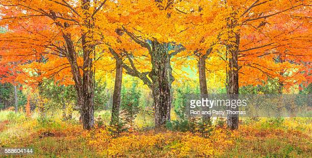 green mountain with autumn sugar maple trees,vt - acero foto e immagini stock