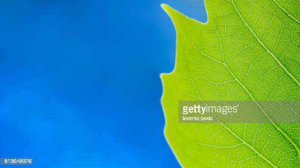 Green nature background design. Green leaf ecology banner. Nature environment