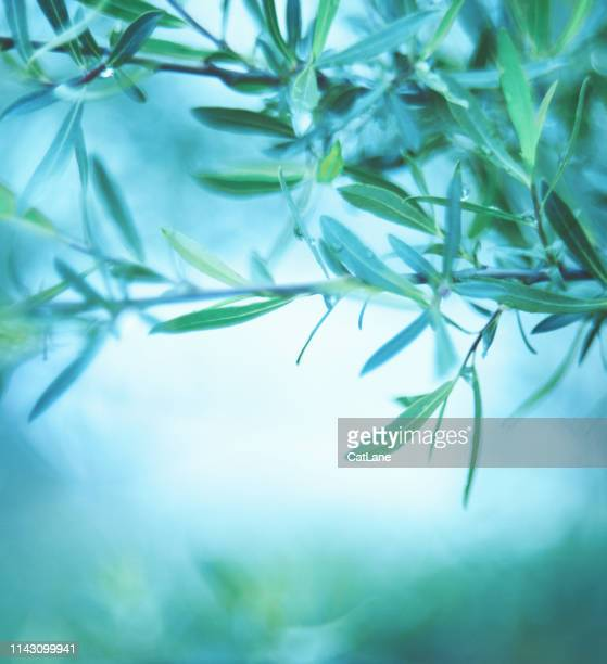 green nature background with willow branches - teal stock pictures, royalty-free photos & images