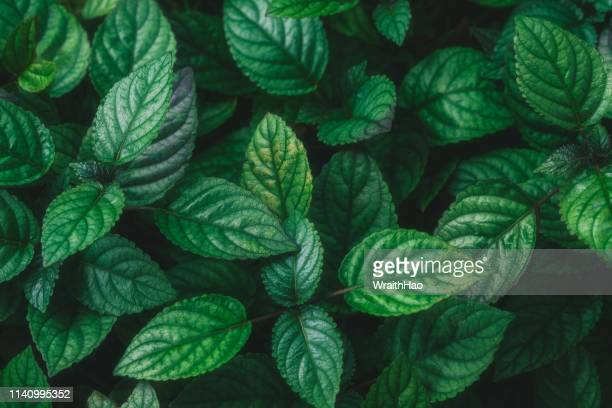 green nature leaves - design elements stock photos and pictures