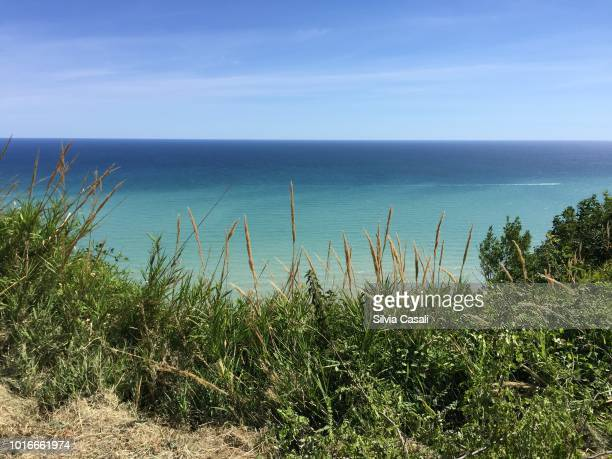 Green nature on a clear blue sea and sky