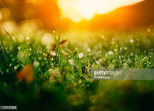 green nature - gras stock pictures, royalty-free photos & images