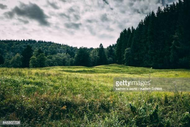 green nature - wiese stock-fotos und bilder