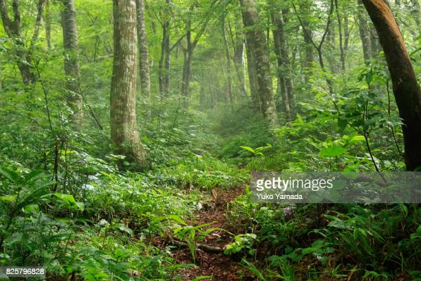 green nature trail in forest - 謎 ストックフォトと画像