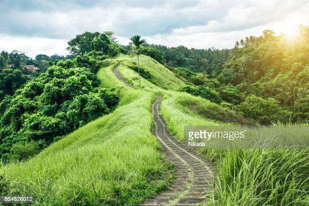 Green nature Trail in Ubud, Bali, Indonesia