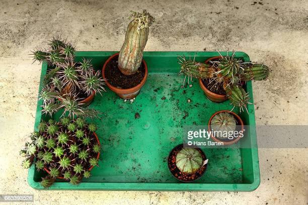 Green of different cacti