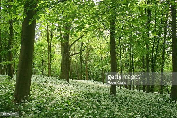 Green of England