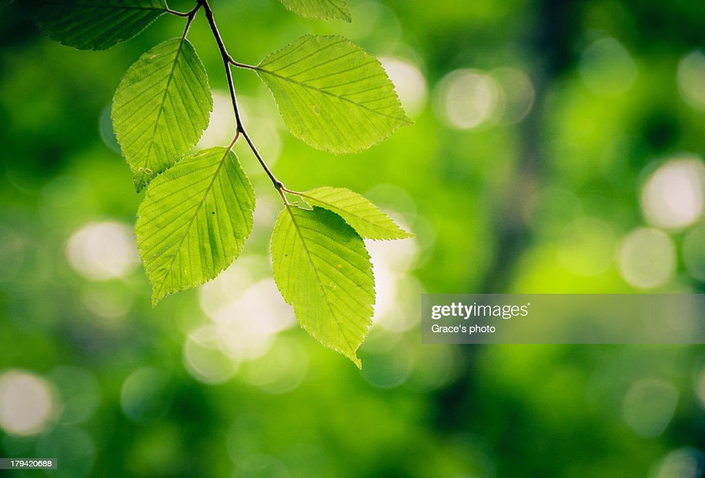 Green of Green : Stock Photo