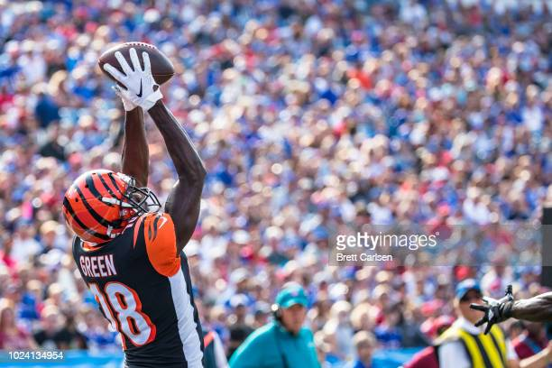 J Green of the Cincinnati Bengals makes a leaping touchdown reception during the first quarter of a preseason game against the Buffalo Bills at New...