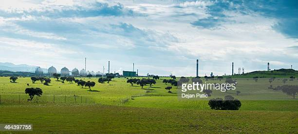 Green olive trees in front of blue industry