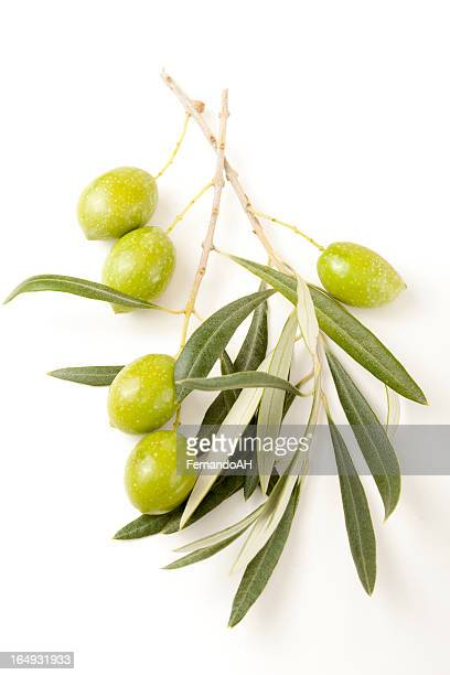 Green olives branches with leaves